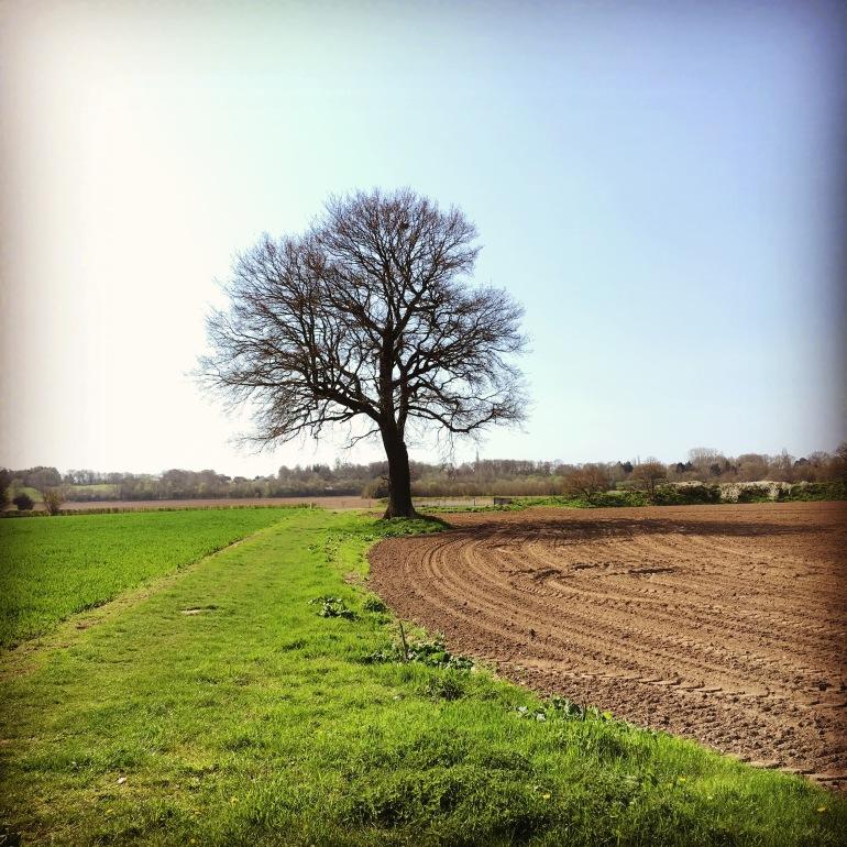 Tree-line_JustinHopper